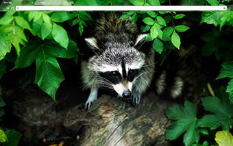 Raccoon Google Chrome Theme