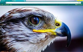 Raptor Google Chrome Theme