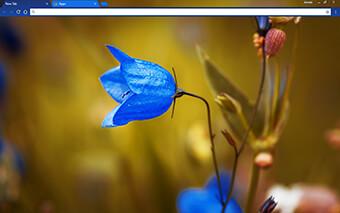 Round Bell Flower Google Chrome Theme