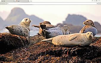 Seals Google Chrome Theme