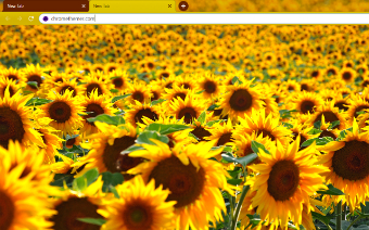 Solarized Sunflowers Google Chrome Theme