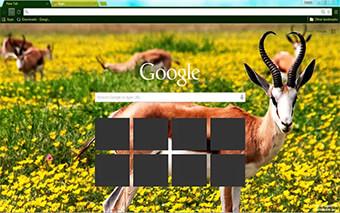 Springbok Google Chrome Theme