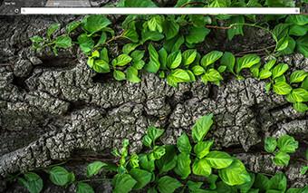 Tree Bark Google Chrome Theme