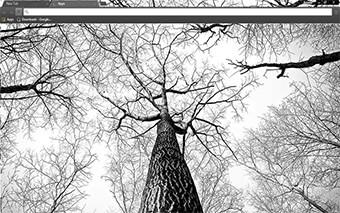 Tree Branches Google Chrome Theme
