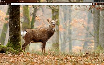 Whitetail Deer Google Chrome Theme