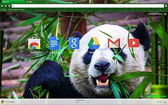 Wild Panda Google Chrome Theme