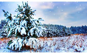 Winter Google Chrome Theme