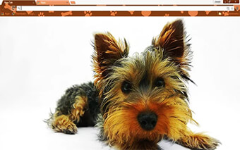 Yorkie Puppy Google Chrome Theme