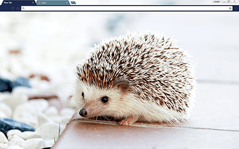 Baby Hedgehog Google Chrome Theme