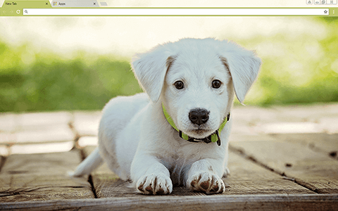 Baby Puppy Google Chrome Theme