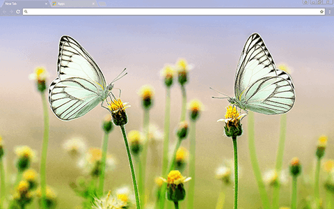 Butterfly Heaven Google Chrome Theme