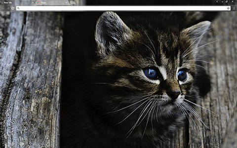 Dark Kitten Google Chrome Theme