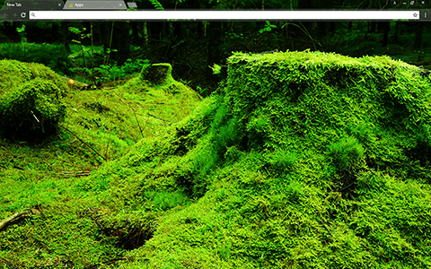Green Forestry Google Chrome Theme