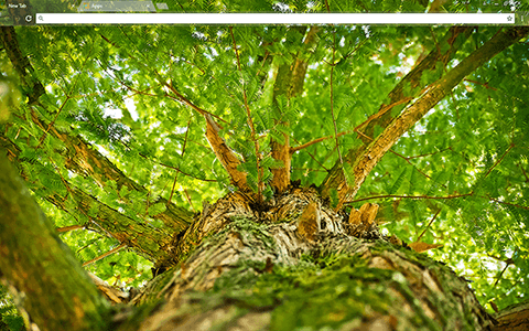 Green Tree Google Chrome Theme