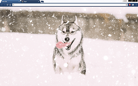 Husky Puppy In Snow Google Chrome Theme