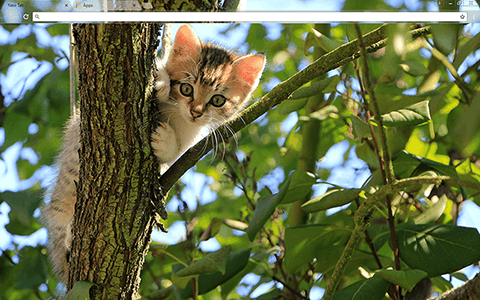Kitten In A Tree Google Chrome Theme