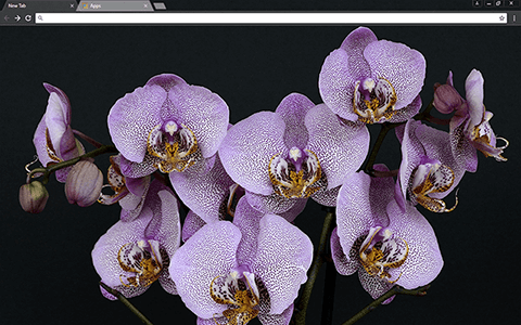 Orchids Google Chrome Theme