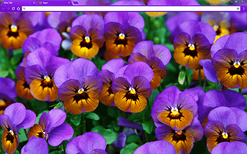 Pansies Google Chrome Theme