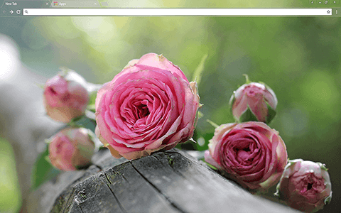 Free Pink Roses Google Chrome Theme