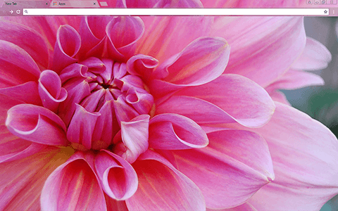 Pinkest Flower Google Chrome Theme
