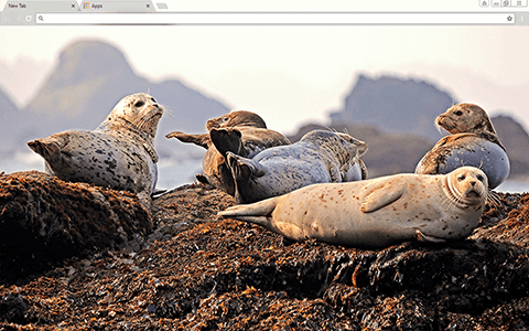 Seals Google Chrome Theme