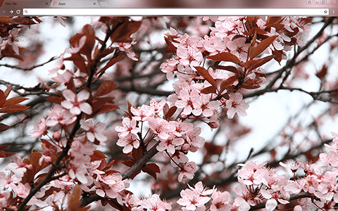 Spring Google Chrome Theme