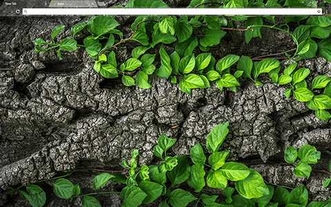 Tree Bark Google Chrome Theme