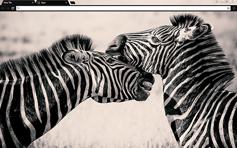 Zebras Google Chrome Theme