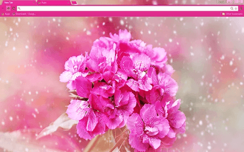 Carnation Flower Google Chrome Theme