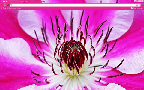 Free Flower Google Chrome Theme