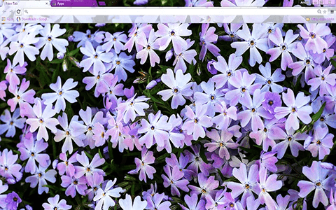 Free Flowers Google Chrome Theme