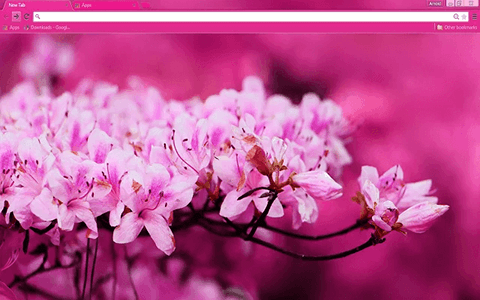 Free Pink Blossom Google Chrome Theme