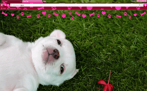 Free Puppy Love Google Chrome Theme
