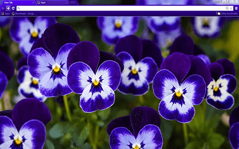 Free Purple Pansy Google Chrome Theme