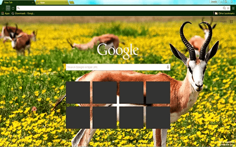 Free Springbok Google Chrome Theme