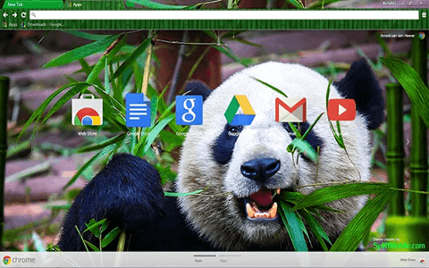 Free Wild Panda Google Chrome Theme