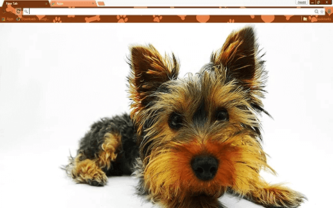 Free Yorkie Puppy Google Chrome Theme