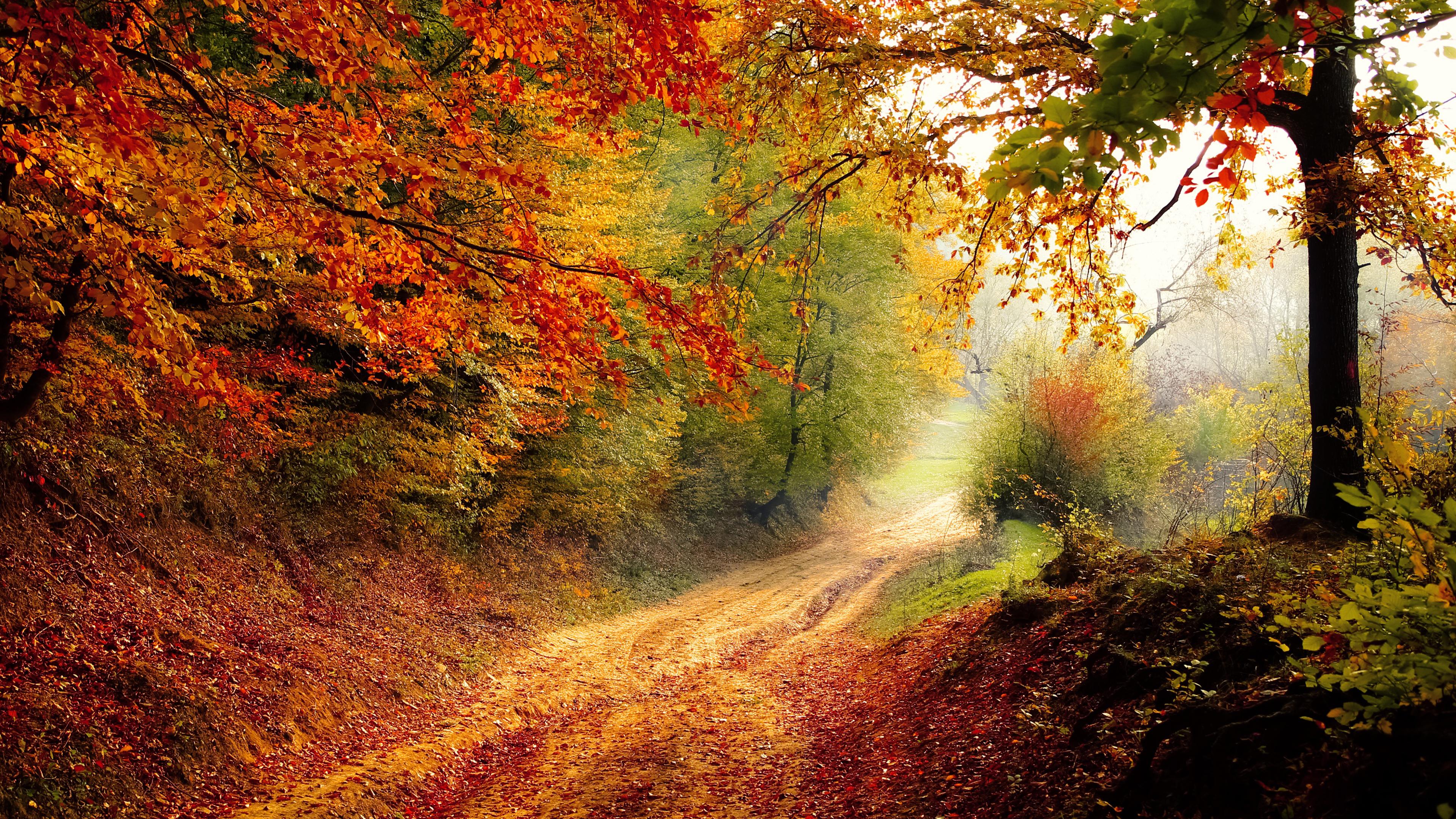 Autumn Road Chromebook Wallpaper