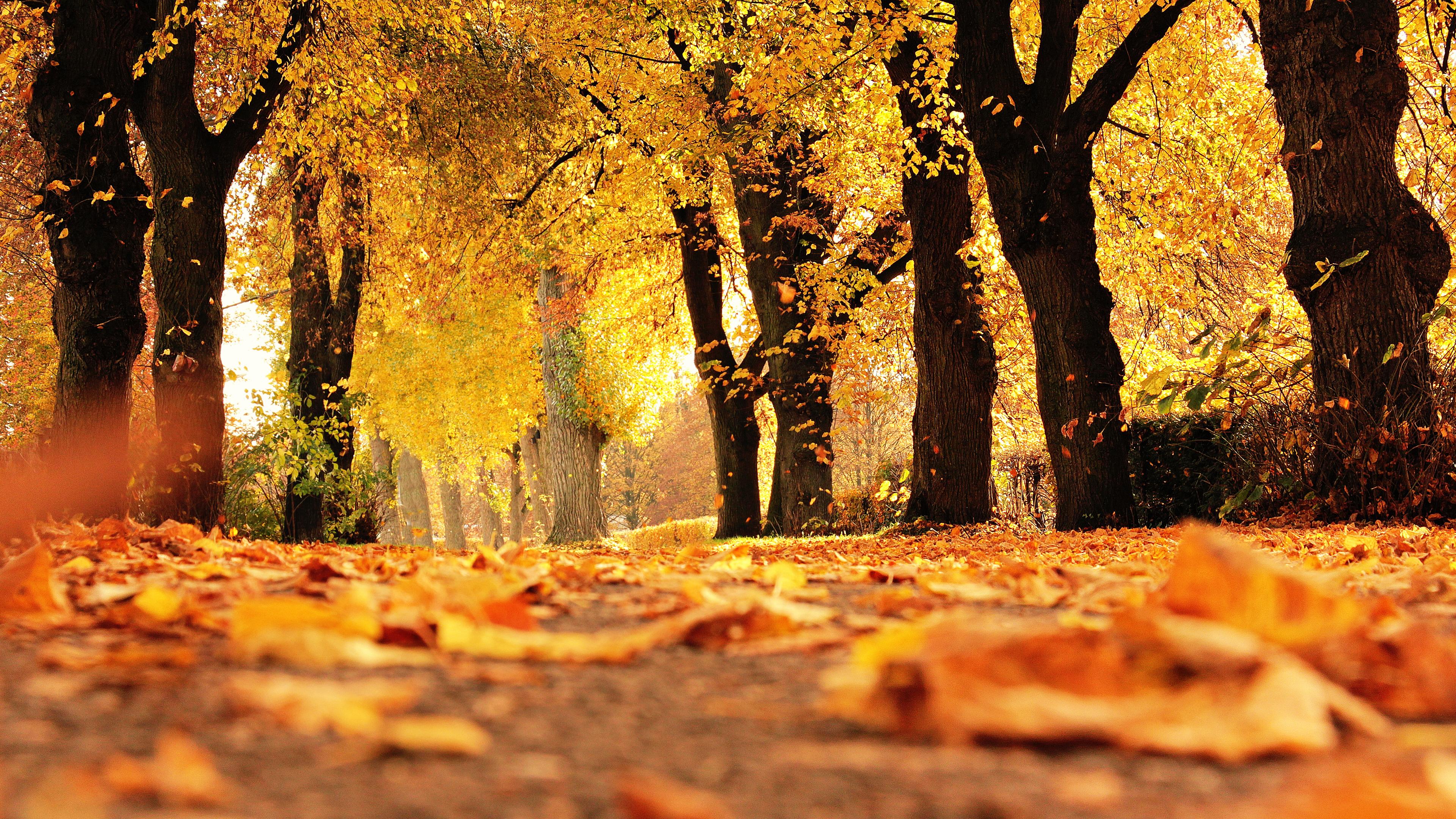 Autumn Trees Chromebook Wallpaper