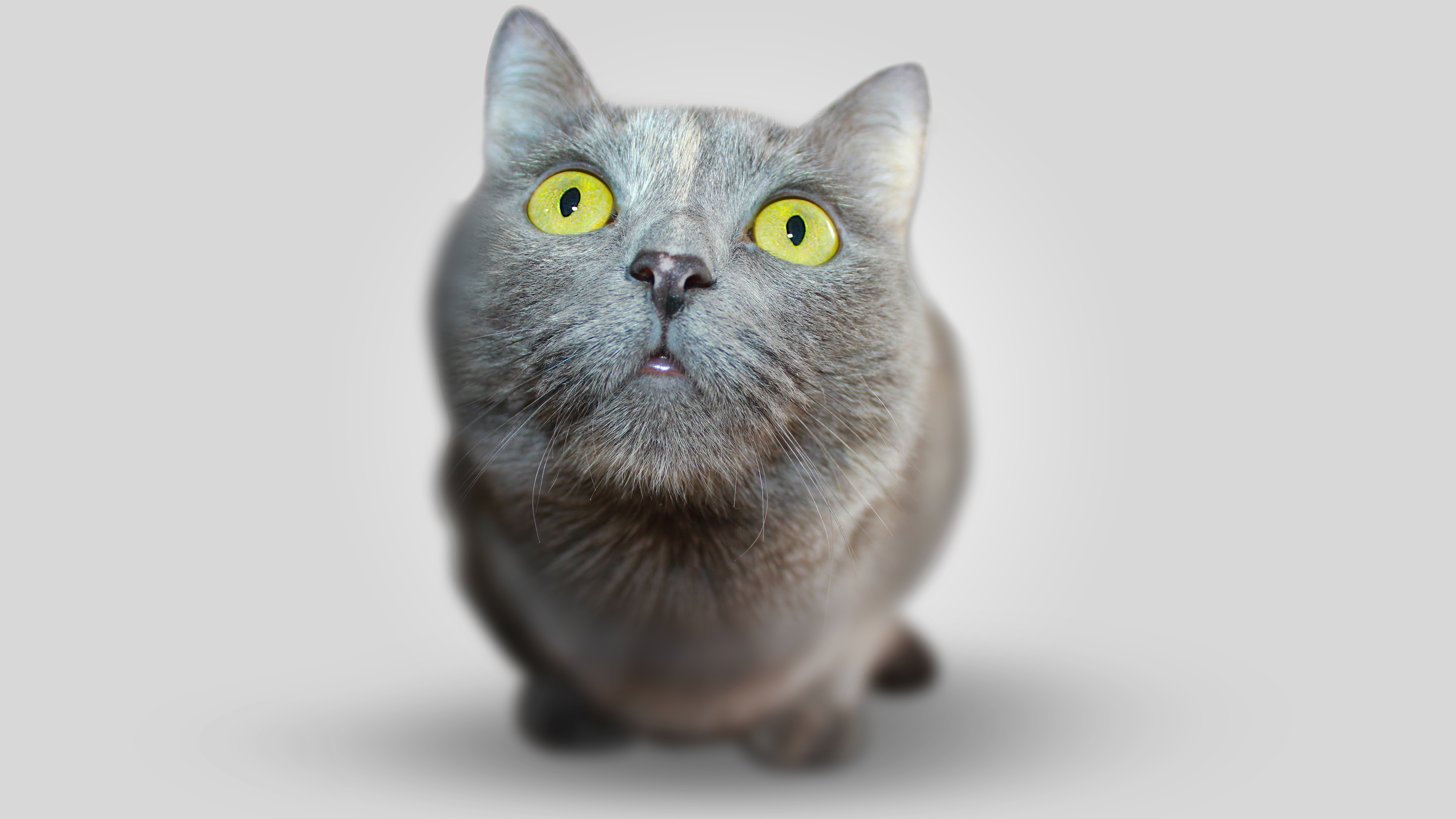 Free Big Head Kitten Chromebook Wallpaper Ready For Download