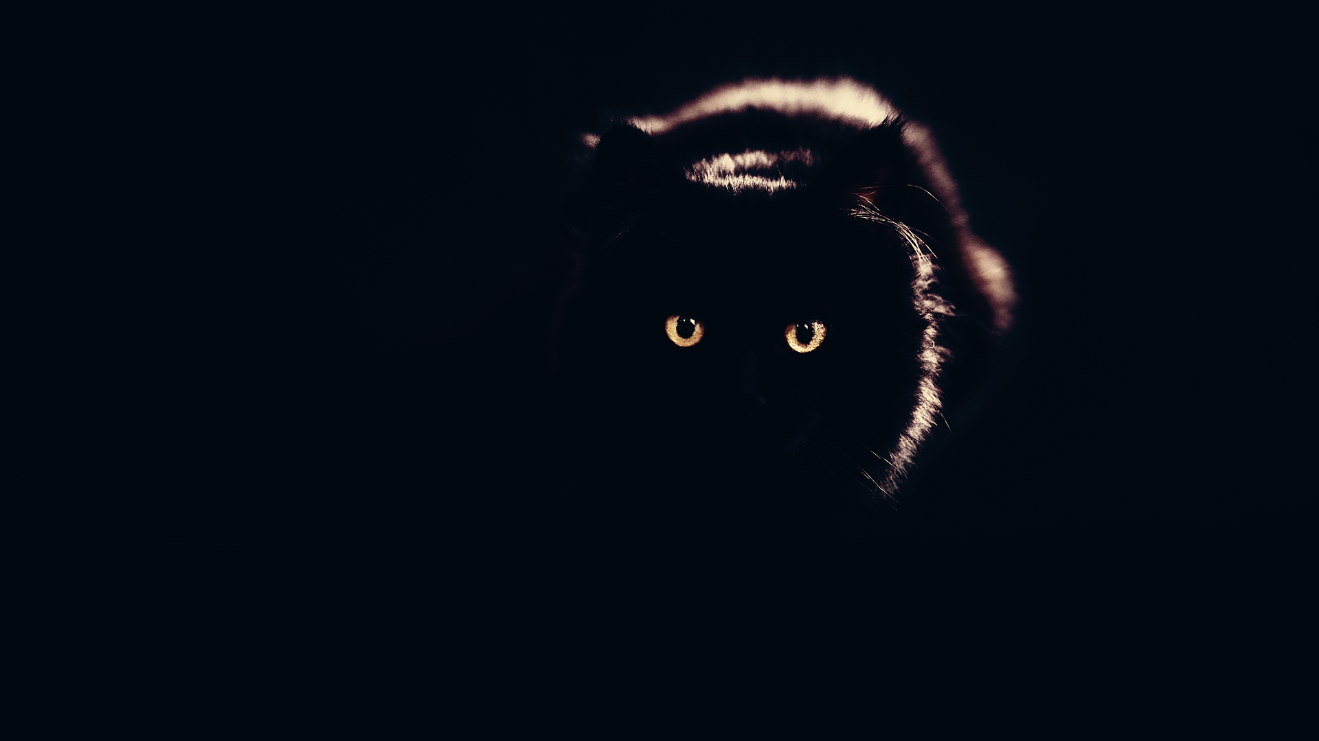 Black Cat Chromebook Wallpaper