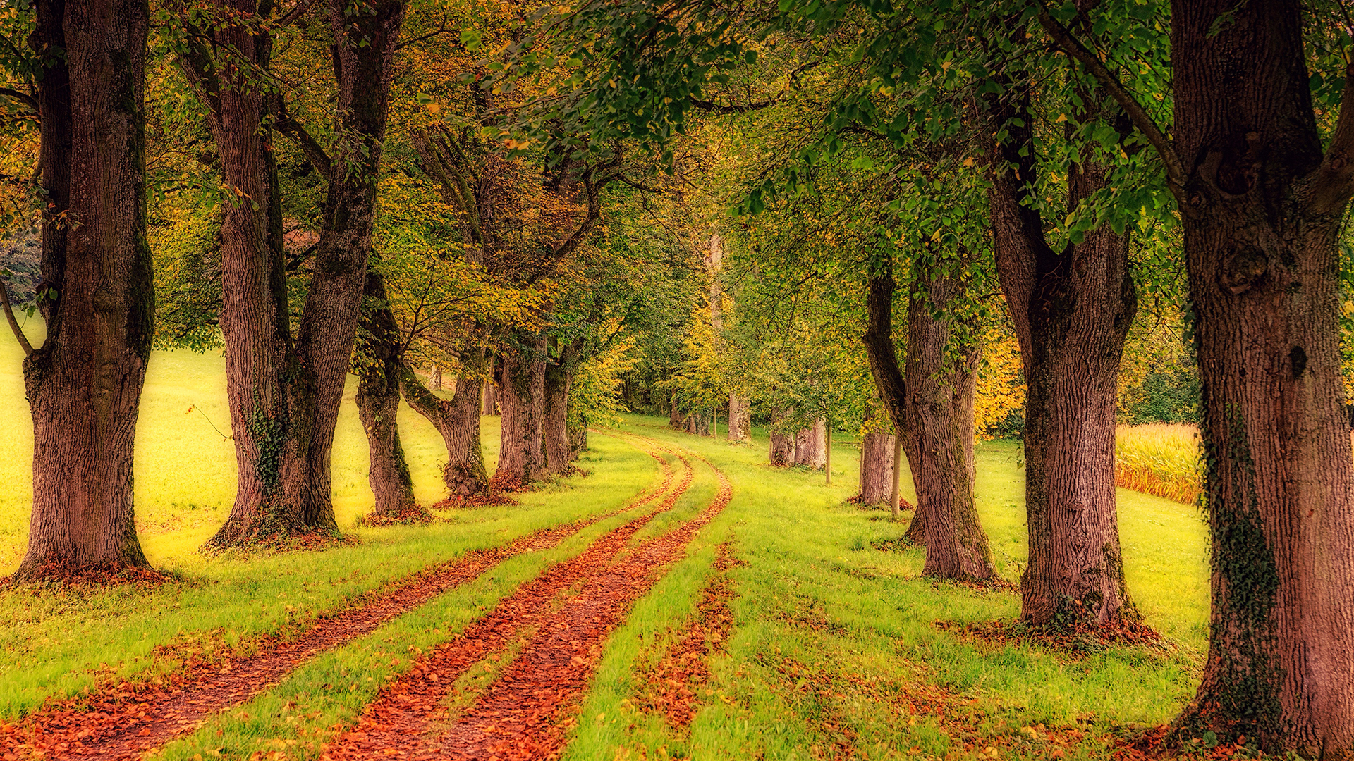 Free green trees 4k chromebook wallpaper ready for download - 4k wallpaper download ...
