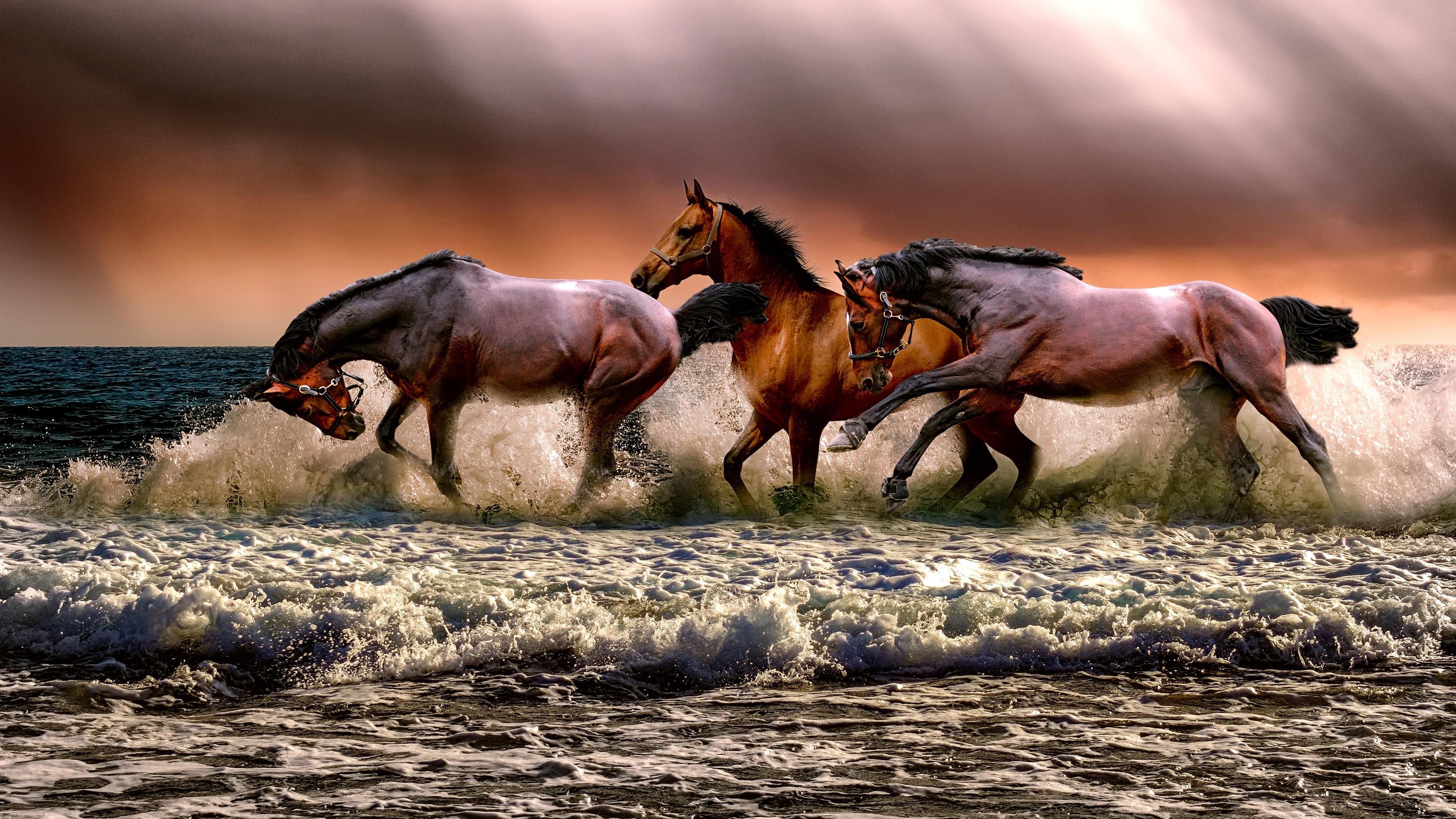 free horses running free chromebook wallpaper ready for