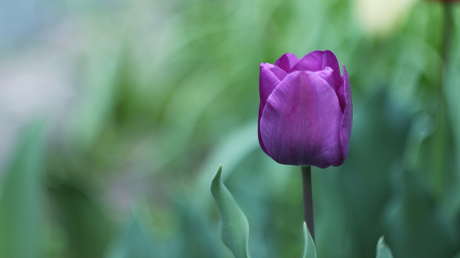 Purple Flower 4k Chromebook Wallpaper