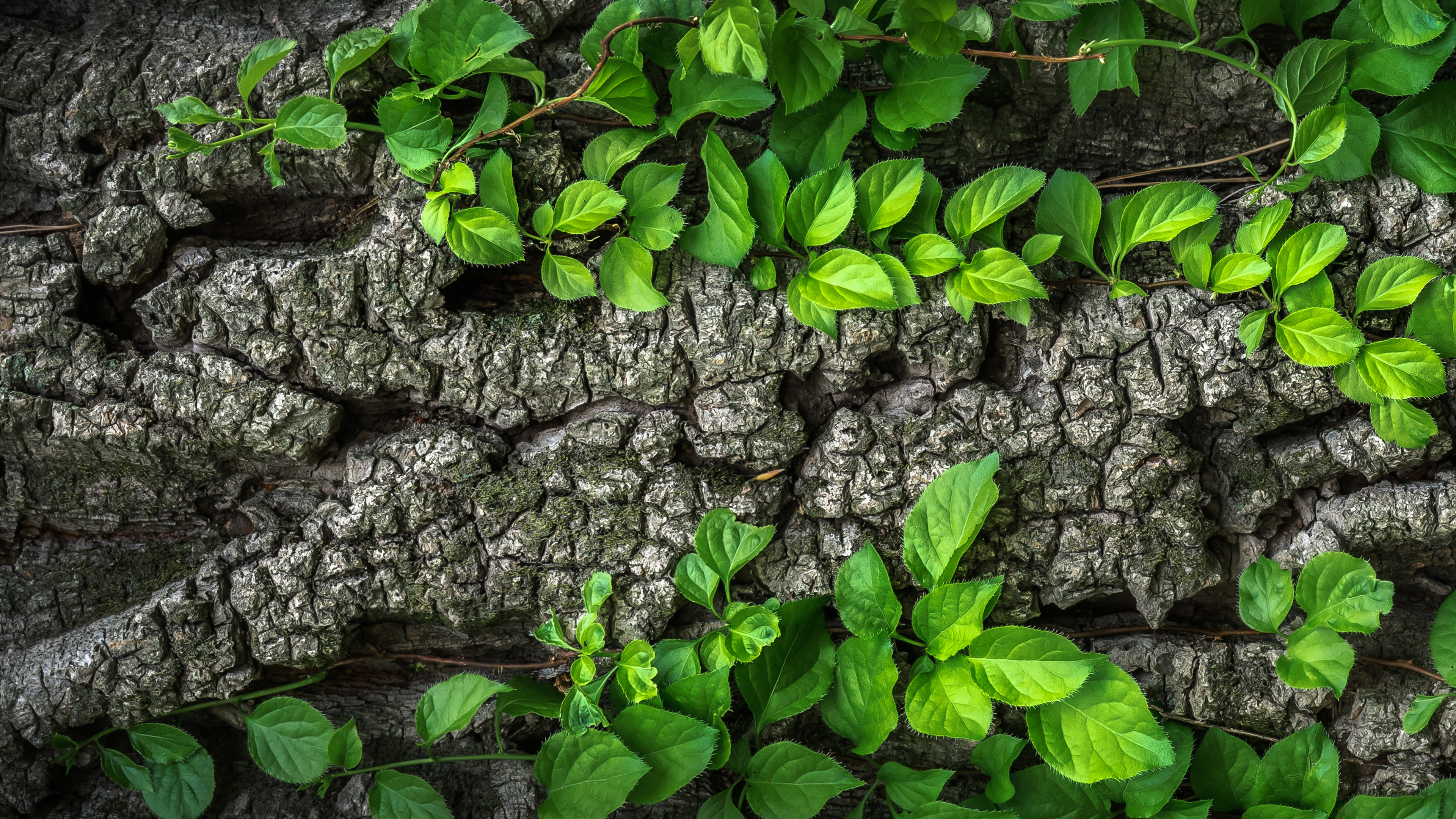 Free Tree Bark Chromebook Wallpaper Ready For Download