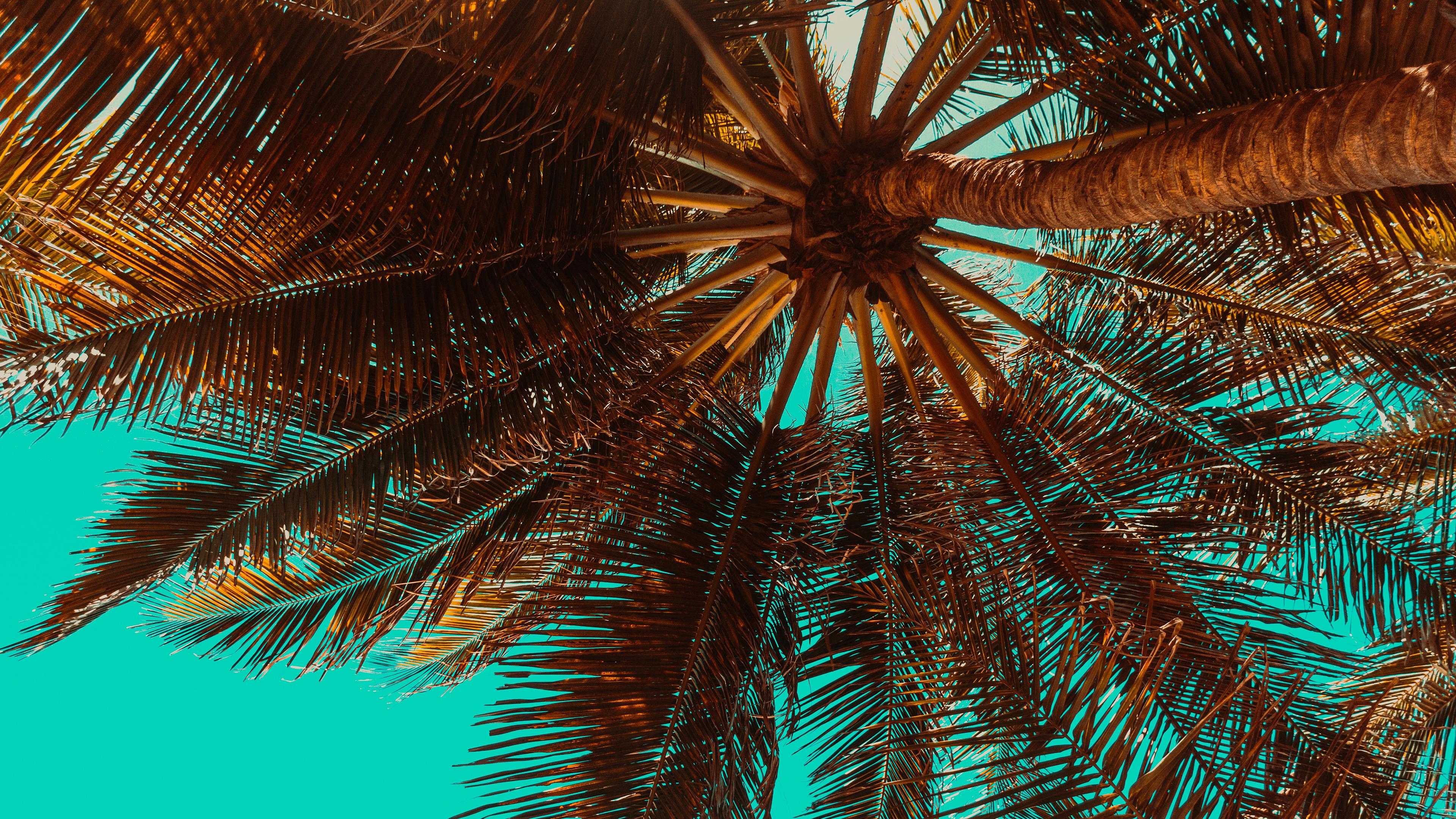 Tropical Palm Tree Chromebook Wallpaper