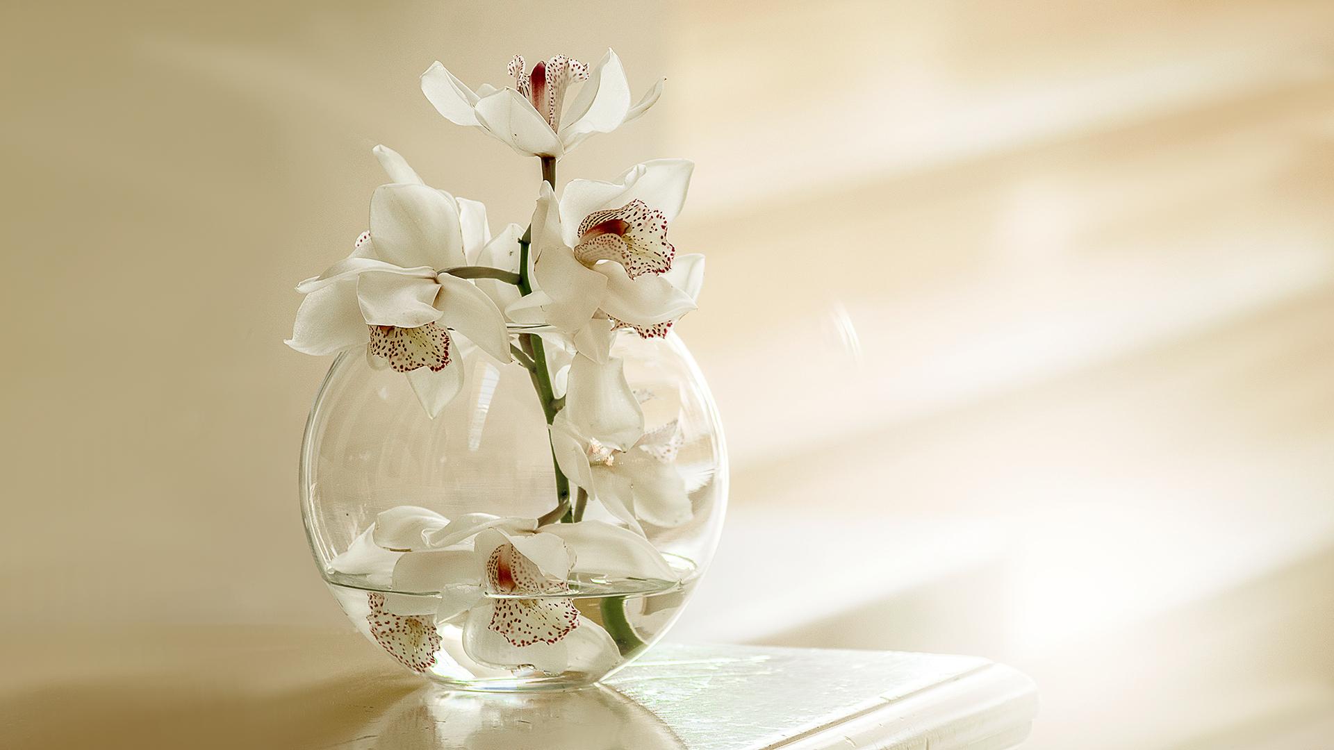 White Orchid Flowers Chromebook Wallpaper