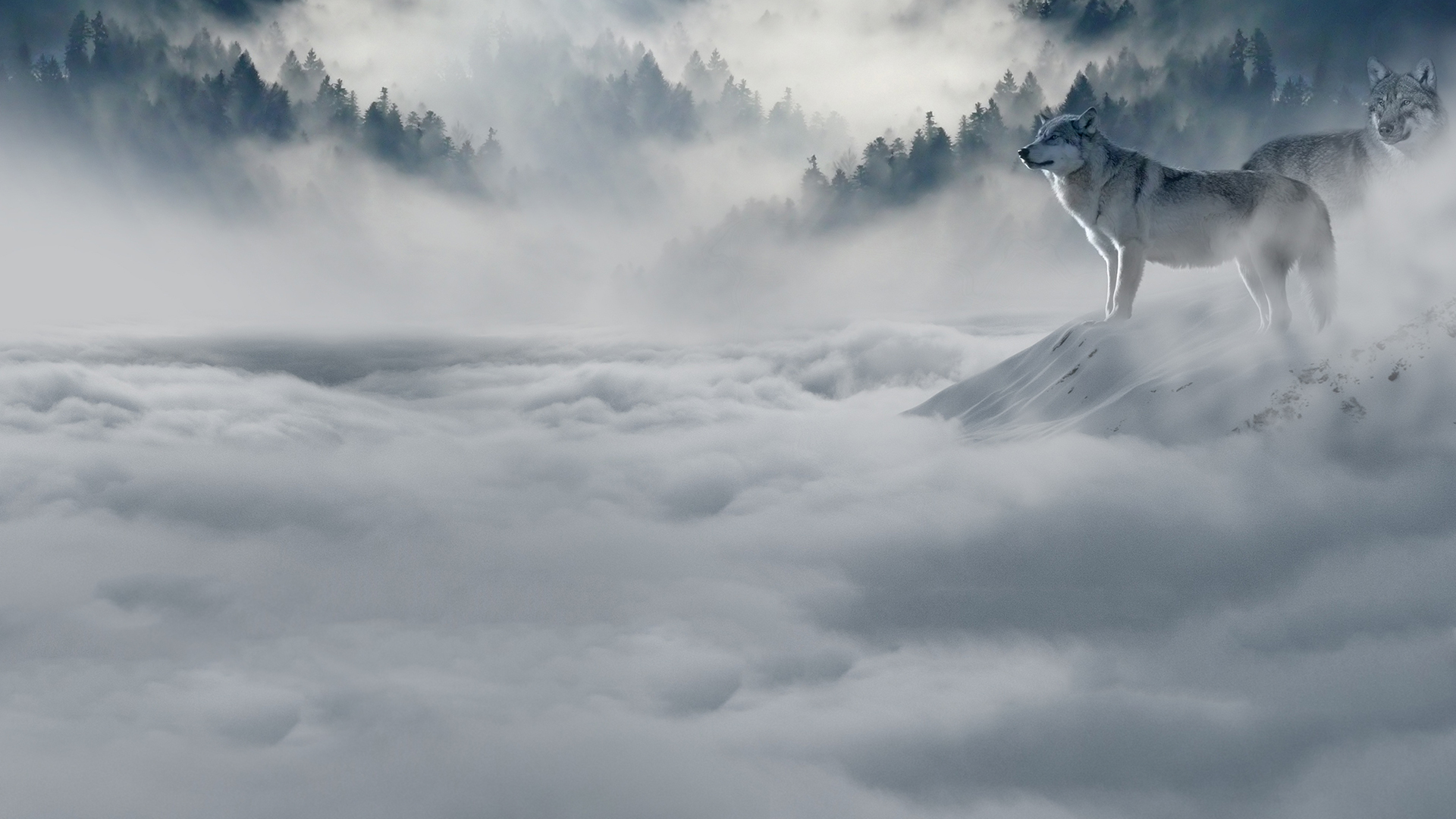 Wolf Chromebook Wallpaper